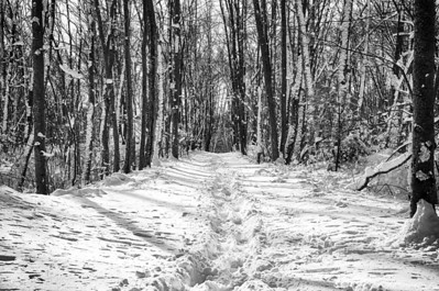 A walk in the cold | Along the Upper Charles Trail Milfird during the last snow of 2012.